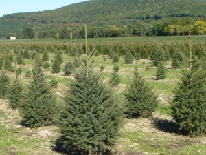 tree farm carrollton ohio